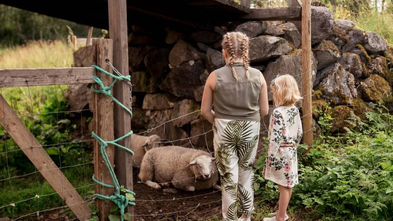 Tytöt katsomassa lampaita voipaalan pihamaalla