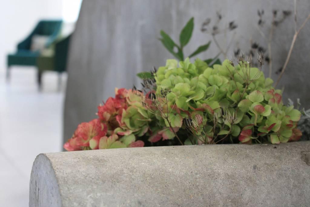 kasveja betonisessa kaukalossa